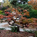 """Kubota Garden • <a style=""""font-size:0.8em;"""" href=""""http://www.flickr.com/photos/25269451@N07/21859467514/"""" target=""""_blank"""">View on Flickr</a>"""