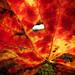 Autumn Colours #2
