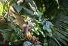 monkey berries (feelagainecuador) Tags: slr digital photography photo nikon photograph dslr d800 thefella conormacneill thefellaphotography
