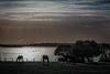 Aves y caballos en libertad. (Javier Martinez de la Ossa) Tags: sunset horses españa lago caballos sevilla andalucía agua nubes puestadesol laguna ocaso doñana dehesadeabajo javiermartinezdelaossa