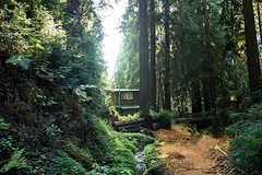 Big Sur: VII (kevintlam) Tags: california camping tree nature outdoors cabin woods hiking redwoods pfeifferstatepark bigsure