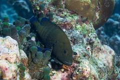 DSC02918 (Martin Flemig) Tags: underwater diving scubadiving kamera tauchen malediven unterwasser nex7 helengeliislandresort