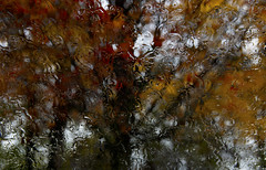 November Songs (.ByOtA.) Tags: november autumn red music tree green fall classic glass colors rain yellow alone branches days day1 omar 2015 byota omarmaro canoneosrebelt6i 6daysinnovember