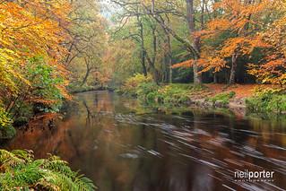 Auburn serenity