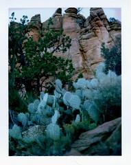 bear mountain trail view (EllenJo) Tags: november cactus polaroid sandstone sedona az hike nationalforest redrock landcamera 2015 sedonaarizona polaroidlandcamera november8 fujifp100c fujiinstantfilm bearmountaintrail redrocksecretmountainwilderness ellenjo ellenjoroberts polaroidpathfinder rollfilmcameraconvertedtopackfilm convertedpathfinder