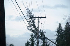 Wind damage in Olympia on Wiggins Road SE. (Puget Sound Energy) Tags: seattle trees usa snow storm tree loss lines electric high energy power unitedstates wind utility stormy down line pole wash sound damage electricity olympia restoration powerline poles winds gusts puget pse outage downed pugetsoundenergy pugetpower