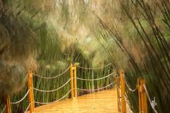 Bridge over troubled water (alx image) Tags: crocopark pont roseaux deco