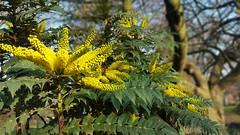 Beauty in winter (DianeDunn) Tags: beautiful fantasticflower