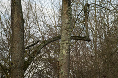 20170104-_IMG0988-Edit (fleetingphotons) Tags: pentaxk1 smcpentaxa200mmf28ed wasingestate fishing warrenbeat kennet trees