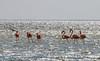 Flamingos in Mexico (BS_86) Tags: flamingos canon eos 6d explore mexiko mexico bird water travel reisen ferien vacation isla holbox ngc