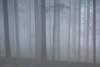 Mt Tabor (Tony Pulokas) Tags: mounttabor mttabor mounttaborpark portland oregon winter fog tree forest douglasfir tilt blur