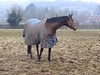 It's just one of those days...again! (jeannie debs) Tags: race horse mist