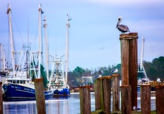 20/365 - A family affair (CarmenSisson) Tags: seafoodindustry shrimping nature shrimpboats boats alabama bayoulabatre gulfcoast birds brownpelicans pelicans seagulls water waterfowl