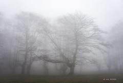 Egiriñao (Jabi Artaraz) Tags: jabiartaraz jartaraz zb euskoflickr hayastrasmochas pagoak egiriñao igiriñao gorbea bosque