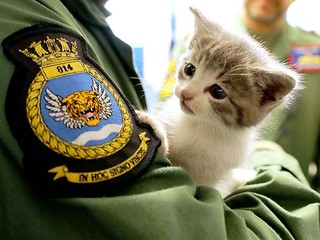 Lieutenant Nick Grimmer of 814 Naval Air Squadron rescue a Kitten.