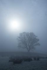 Morning fog (Keartona) Tags: misty morning mist fog tree silhouette branches landscape england winter sun lowcloud derbyshire field