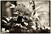 Red carnation - Nik (judy dean) Tags: judydean 2017 sonya6000 lr nikcolorefex
