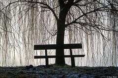 Nature's curtain.. (tferi666) Tags: winter fog beautiful nature best nice fantastic ngc sony alpha next ilce a6300 sonyflickraward sonyflickawardgold amazing hungary magyar zemplén bodrog berek 18105mm
