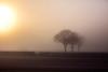 Essex field. (Lee Barnsley) Tags: sunlight landscape dsr d canon mist hutton essex dawn sunrise
