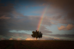 The Chosen One (blueteeth) Tags: rainbow tree cloudscape vineyard solitary ethereal singular