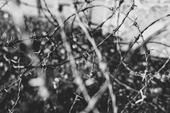 Warning (eLuVeFlickr) Tags: warning senda camino road peligro espinos alambre pinchos blancoynegro blackandwhite bn bw black white eluve eluveflickr nikon d7000 35mm 18 jerez cádiz andalucia andalusia spain españa outdoor out