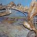 Megacerops robustus (fossil titanothere) (Oligocene; Nebraska, USA) 2