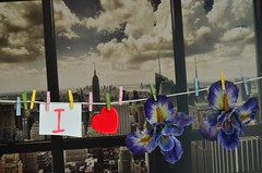"I LOVE SPRING. "" SPRING ""is the first kiss of Summer. (Đøn@tus ♠) Tags: springtime springtimeinthecity spring flowers flowerspower laundryflowers colors colored colori farben newyorkcity panorama travelinglandscape traveling travel travelpanorama primavera frühling thefourseason"