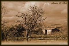 Casetta di campagna... effetto seppia - Gennaio-2017 (agostinodascoli) Tags: art digitalart texture nature agostinodascoli alberi landscape paesaggi seppia nikon nikkor cianciana sicilia photoshop photopainting