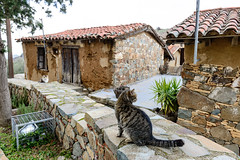 Cats Posing (George Plakides - Off for a few days) Tags: cyprus phikardou fikardou vernacular architecture cats stone mud walls rooftiles