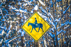 horse and rider crossing sign in winter (DigiDreamGrafix.com) Tags: sign crossing warning equestrian unitedstates mutcd sideview isolatedonwhite northamerica warningsign horsebackriding computergeneratedimage diamondshape yellow white illustration diamond isolated reflection person danger animal black silhouette square usa textured ride horse america cgi quadratic winter snow