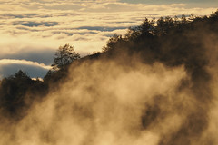 Sunset dusk|合歡山 Hehuanshan (里卡豆) Tags: sunset dusk 合歡山 hehuanshan olympus penf 台灣 taiwan 雲海 高山 75300mmii f4867 75300mmf4867ii mountain 日落 黃昏 夕陽 cloud clouds
