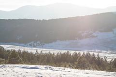 The Forest and Mountains mist (symonap) Tags: digital landscape snow mountain mountains winter season calm idyllic mist outdoor peak wilderness view sun sunset sunrise panorama nature tree forest woods serbia zlatibor