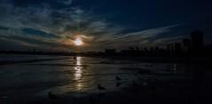 Evening,  the Beach (beachpeepsrus) Tags: beach birds beachfront shore sky sunset sihlouette shorefront seagull alamitosbay water clouds california city coast