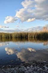 Reflection. (Kayla Christina) Tags: lake water rain cloud clouds mittry az arizona yuma scenic scenery cloudy reflection weeds tullies rocks ripples