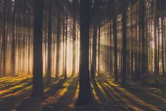 Open Your Eyes (Stefan (back from Scotland, but need some time)) Tags: forest light shadow tree trees wald timberland woodland timber woods bavaria bayern hike raysoflight rays raysofgod sunbeam sunbeams sunrise sunset sunlight day beautiful sonya7 sonya7m2 sonya7ii sel2470gm