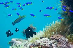 20150829-DSC_9643-3.jpg (d3_plus) Tags: sea sky fish beach japan scenery underwater diving snorkeling  shizuoka    apnea izu j4  waterproofcase    skindiving minamiizu       nikon1 hirizo  1030mm  nakagi 1  nikon1j4 1nikkorvr1030mmf3556pdzoom beachhirizo misakafishingport  1030mmpd nikonwpn3 wpn3