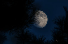 Moon thru the pines (Donald.Gallagher) Tags: trees usa moon nature photoshop de pines northamerica delaware clearsky merged moonshots pikecreek sigma170500 woodcreek