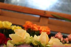 wonderLand (Rodrigo Alceu Dispor) Tags: flower color rose festival wonderland