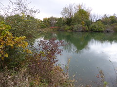 Silver Springs State Park, IL, Loon Lake, Fall Foliage (Mary Warren (9.1+ million views)) Tags: lake reflection fall nature water pond flora loonlake silverspringsstatepark