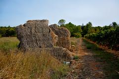 Bottes de paille (lizard.land) Tags: nikon champs straw vine trail fields vigne chemin botte paille bottesdepaille d7100 hdrenfrancais baleokstraw