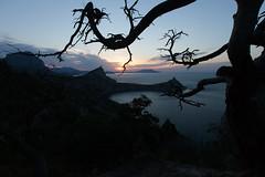 (figishe2) Tags: wood sea mountains sunrise dark landscape curves deadtree