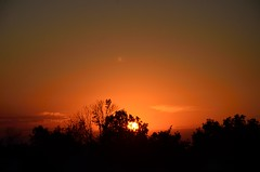 DSC_2316 (bfaling) Tags: trees columbus ohio red summer orange sun yard sunrise back glow neighborhood oh 2015