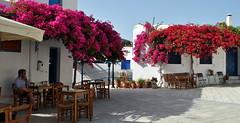 What Are You Thinking About? (Filippo Saluzzo) Tags: flowers summer loneliness estate greece grecia fiori paros cyclades lefkes solitudine cicladi