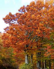 Pratomagno - 1 (anto_gal) Tags: alberi firenze toscana autunno montagna bosco casentino arezzo pratomagno valdarno 2015 lorociuffenna