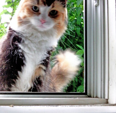 ** Une visiteuse inattendue ** 1/2 (Impatience_1) Tags: pet tree window animal cat m arbre fentre chatte impatience catinwindow coth bte animaldecompagnie supershot fantasticnature abigfave chatlafentre fabuleuse alittlebeauty coth5 sunrays5