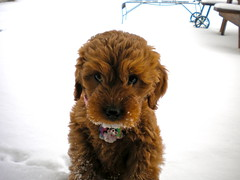 brrrr--this-is-london--shes-one-of-riley-and-chewys-girls-_4273529863_o