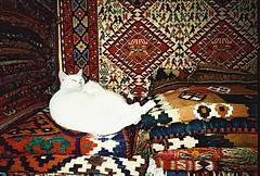 (golfpunkgirl) Tags: travel friends cats holiday streets film turkey lomo market walk w wide istanbul mosque medusa grandbazaar lomographyfilm fujiklasse october2015