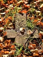 WRC Oct 16 - 17 (Lostash) Tags: death graveyards burials memorials cemetaries tombs graves gravestones tombstones leicester welfordroadcemetary