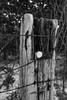 Black / White (thefisch1) Tags: monochrome black white fence post wire barbed snow kansas