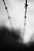 Past the Line (belleshaw) Tags: blackandwhite ranchosantaanabotanicgarden barbedwire fence metal points sky rust line barrier detail abstract silhouette bokeh